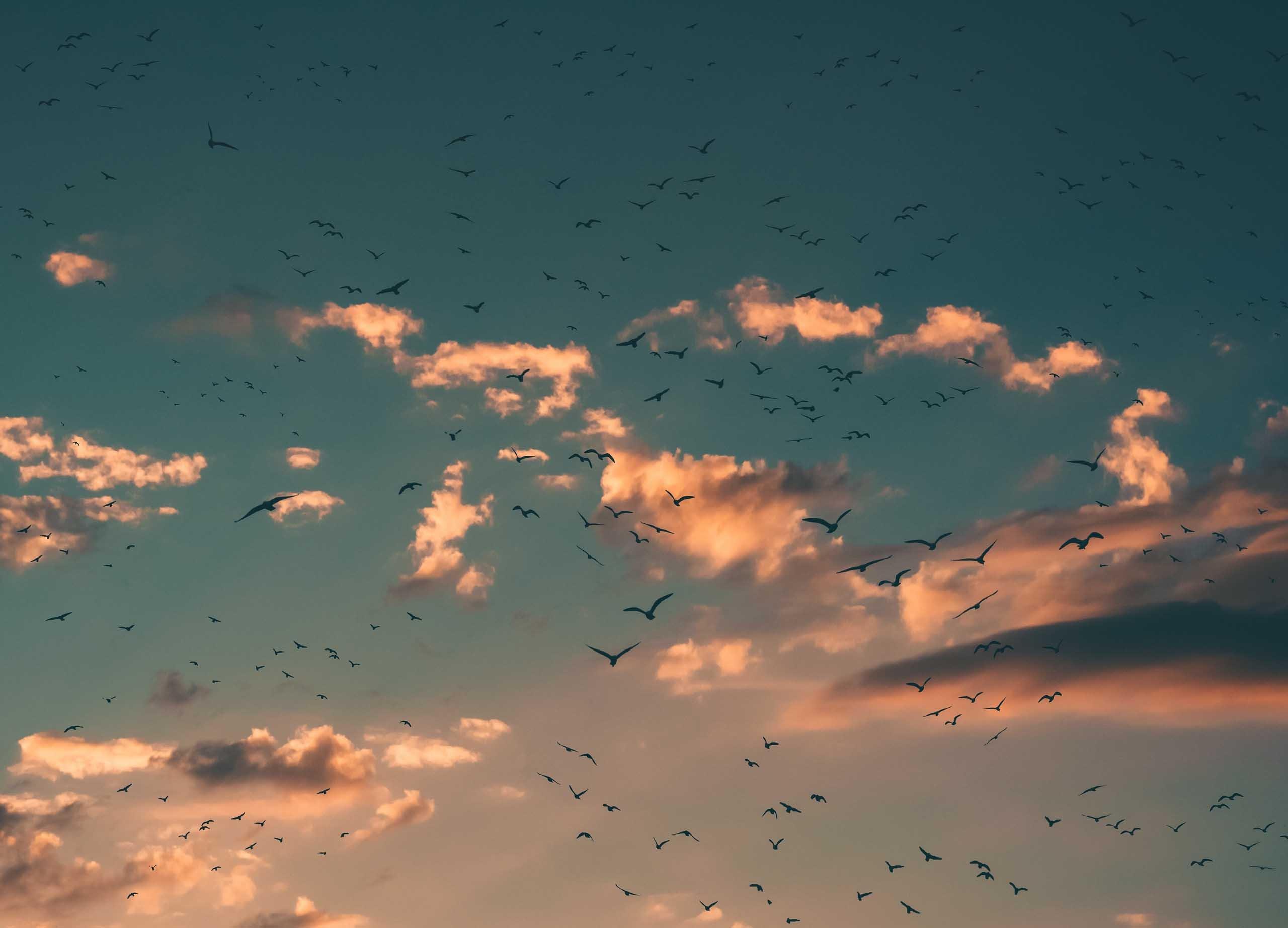 Cloud computing | Le diverse forme del Cloud