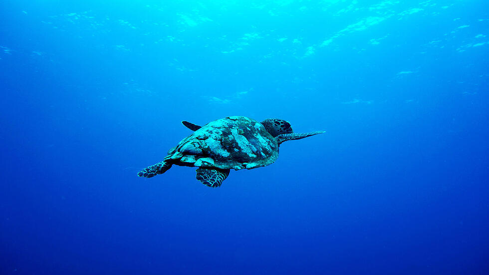eCommerce Inbound Marketing come strategia Oceano Blu per eCommerce